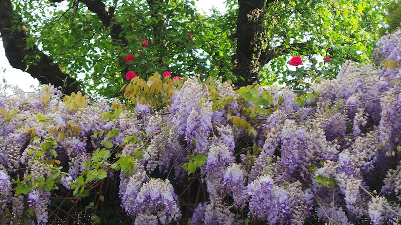 Lilac website